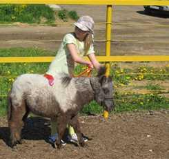 В гости к мини лошадям  Изображение 0