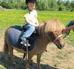 В гости к мини лошадям  Изображение 1