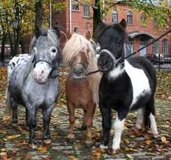 В гости к мини лошадям  Изображение 2