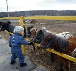 В гости к мини лошадям  Изображение 3
