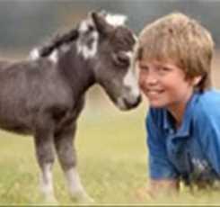 В гости к мини лошадям  Изображение 4