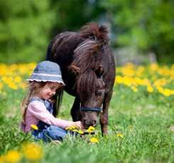 В гости к мини лошадям  Изображение 5