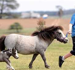 В гости к мини лошадям  Изображение 6