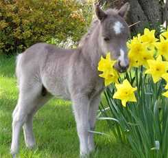 В гости к мини лошадям  Изображение 7