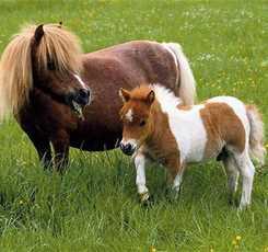 В гости к мини лошадям  Изображение 8