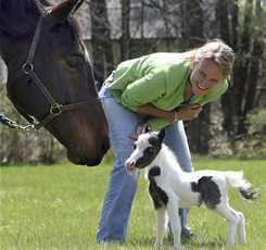 В гости к мини лошадям  Изображение 9