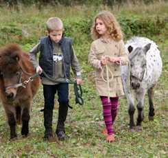 В гости к мини лошадям  Изображение 10