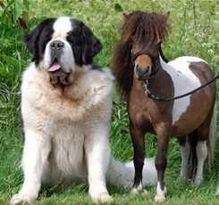 В гости к мини лошадям  Изображение 11