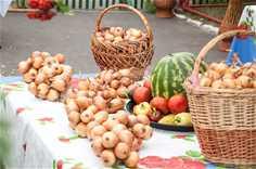 Стригуновское Лукоморье (фестиваль лука)