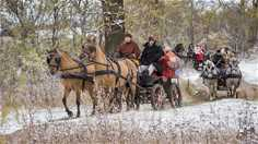 Турнир по традиционной экипажной езде «Владимирский тракт»