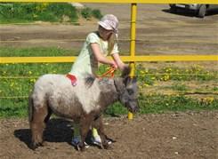 В гости к мини лошадям