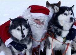 Новогодние приключения у Белого Клыка